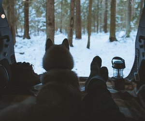 animal, dog, and forest image