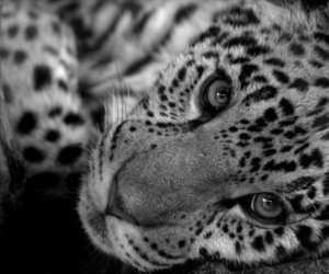 black and white, animal, and nature image