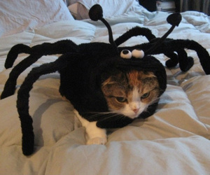 cat, cute, and spider image