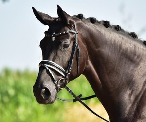 horse, riding, and trense image