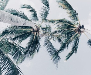 beach, palmtrees, and tropical image