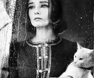 audrey hepburn, cat, and rain image