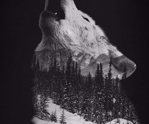 wolf, black and white, and art image