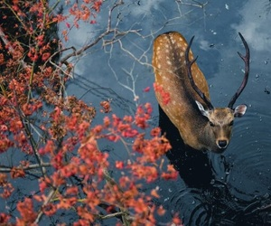 nature, deer, and animal image