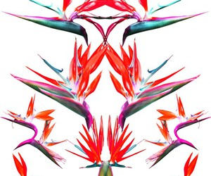 floral, birds of paradise, and flower image