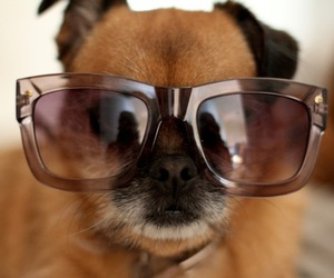 dogs, glasses, and cute image