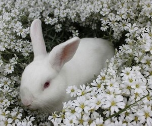 flowers, rabbit, and animal image