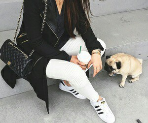 fashion, dog, and adidas image