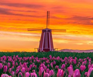 oregon, pink, and windmill image