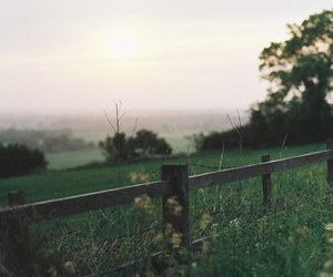 nature, green, and grass image