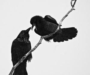 bird and black image