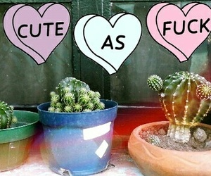 cactus lover image