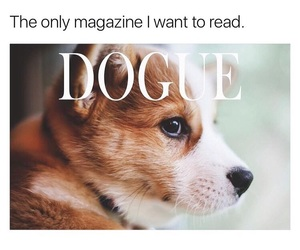 funny and dogs image