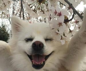 flowers, animal, and dog image