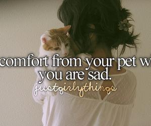 pet, cat, and sad image