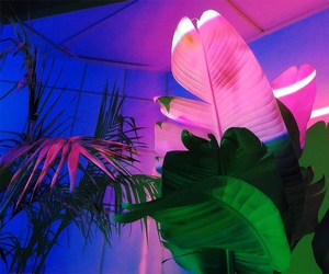 neon, pink, and plants image