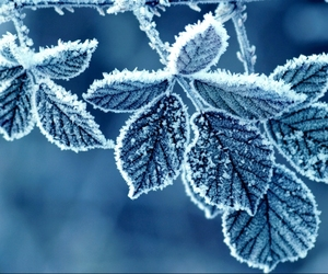 blue, rime, and Letter image