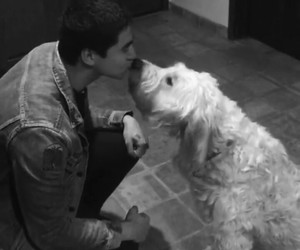 black&white, dog, and 5sos image
