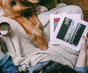 dog, photo, and tea image