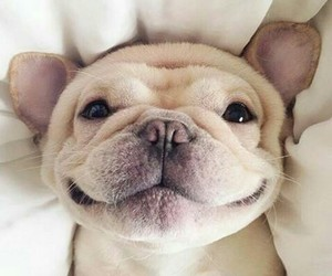 dog, cute, and smile image