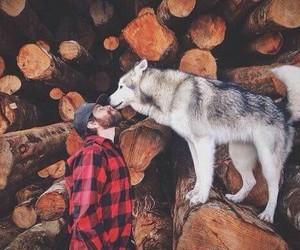 dog, wood, and husky image
