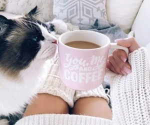 cat, coffee, and winter image