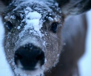 deer, snow, and animal image