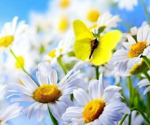 blue sky, daisy, and flowers image