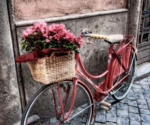 bicycle, flowers, and pink image