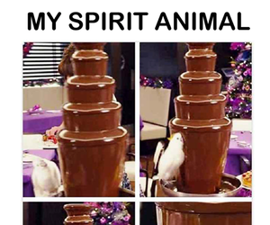 chocolate, funny, and spirit animal image