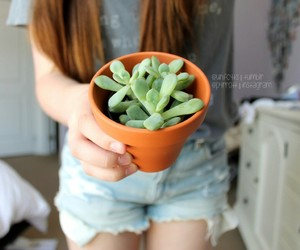 plants, cute, and cactus image