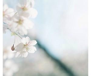 blossom, cherry blossom, and moda image