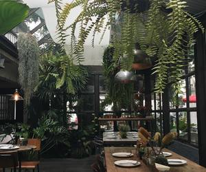 plants, green, and restaurant image