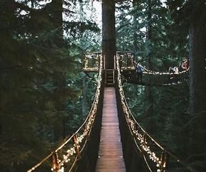 light, nature, and bridge image