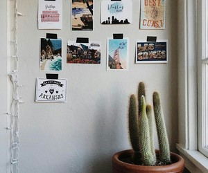 cacti, cactus, and plant image
