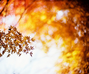 2010, autumn, and glow image