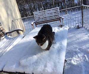 snow and mylittlecat image