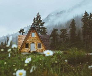 house, nature, and flowers image