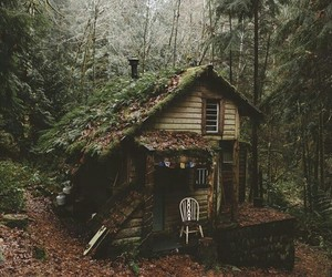 forest, home, and photography image