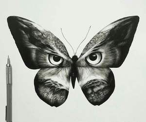 animal, art, and butterfly image