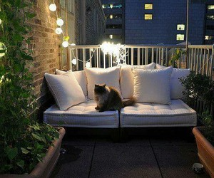 balcony, cat, and light image