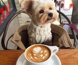 cute, cafe, and dog image