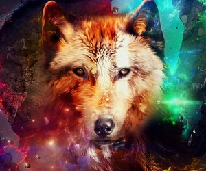 wolf, animal, and galaxy image