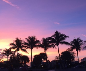 palm trees, pink, and purple image