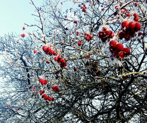 beauty, berries, and winter image