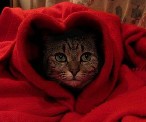 cat, red, and pet image