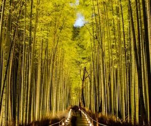 zen and jardín image