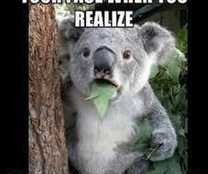 Koala, funny, and lol image