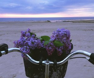 flowers, beach, and bike image