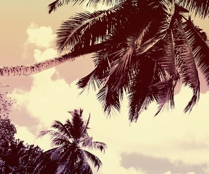 background, palms, and phone image